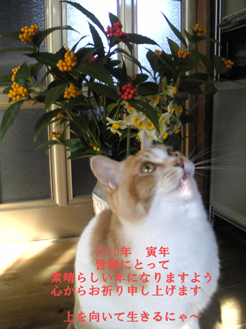 Image336~00.jpg